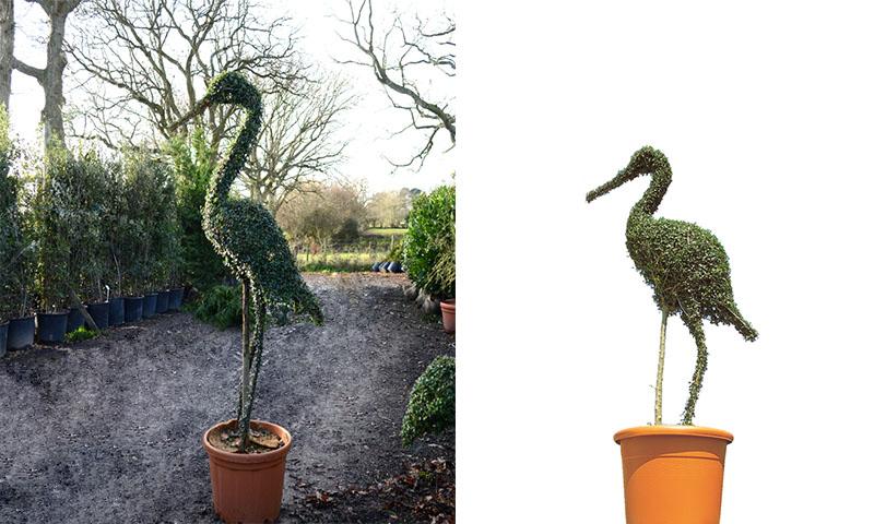 Topiary Stork (Ligustrum Jonandrum) - Garden Plants Online