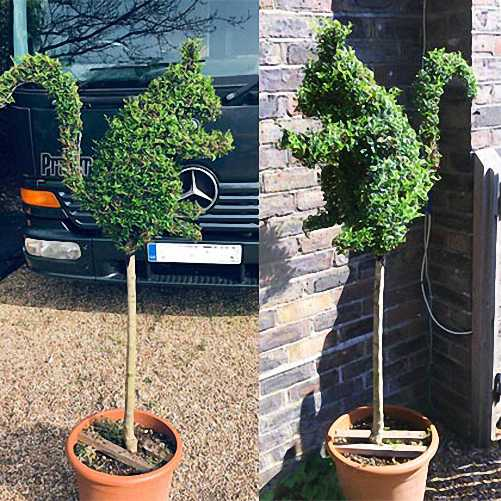 Topiary Squirrel (Sale)