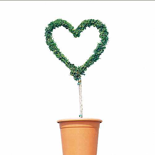 Topiary Heart (Sale)