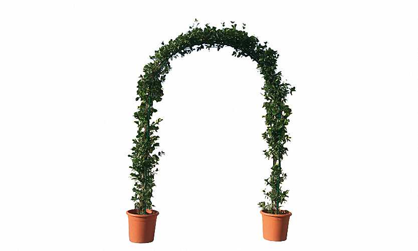 Topiary Double Arch (Hedera)