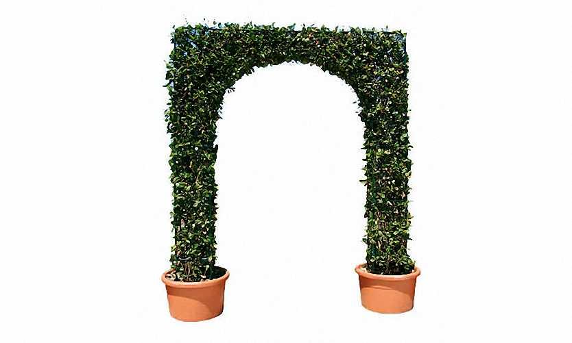 Topiary Arch (Hedera Hibernica)