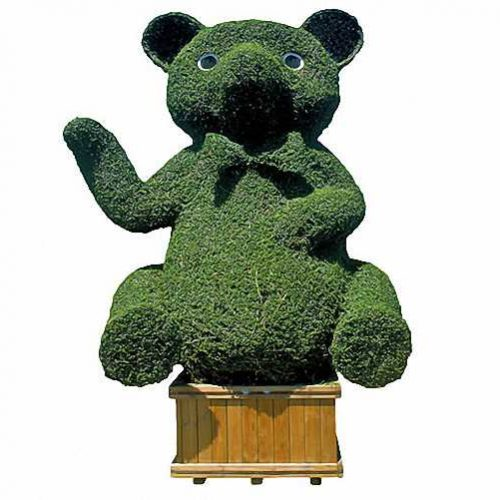 Topiary Bear / Topiary Teddy (Ligustrum Jonandrum)