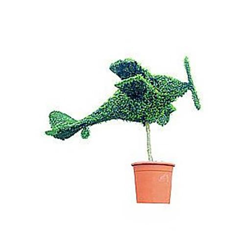 Topiary Biplane (Ligustrum Jonandrum)