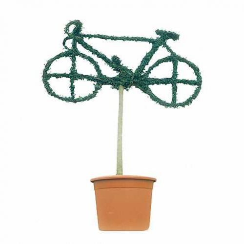 Topiary Bicycle (Ligustrum Jonandrum)