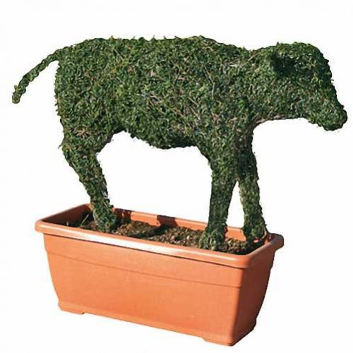 Topiary Calf (Ligustrum Jonandrum)