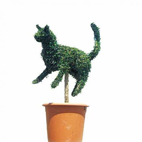 Topiary Cat (Ligustrum Jonandrum)