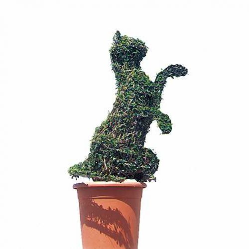 Topiary Cat Sitting (Ligustrum Jonandrum)