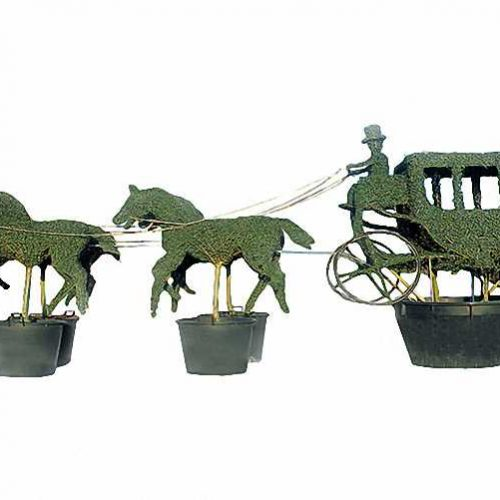 Topiary Carriage and 4 Horses (Ligustrum Jonandrum)