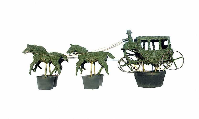 Topiary Carriage and 4 Horses (Ligustrum Jonandrum)