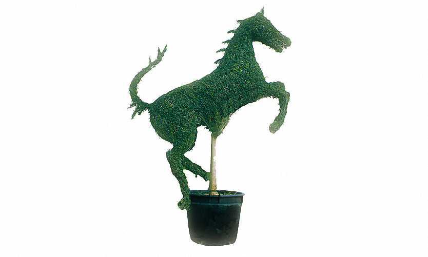 Topiary Prancing Horse (Ligustrum Jonandrum)