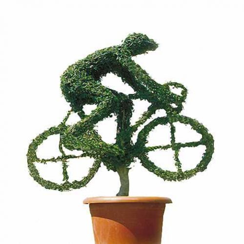 Topiary Cyclist (Ligustrum Jonandrum)