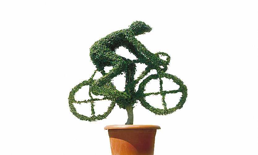 Topiary Cyclist (Ligustrum Jonandrum)