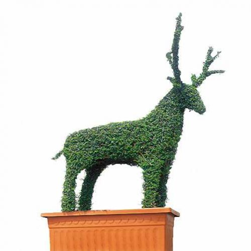 Topiary Deer (Ligustrum Jonandrum)