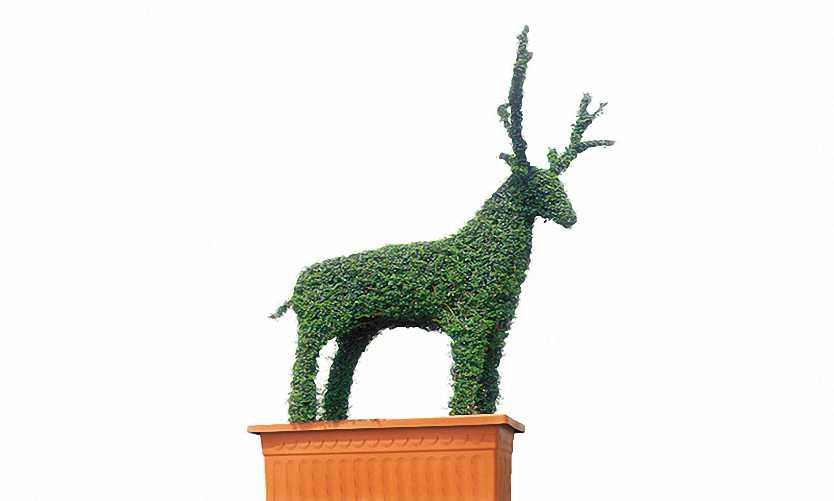 Topiary Deer (Ligustrum Jonandrum)