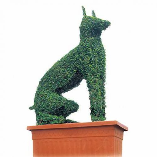 Topiary Doberman Dog (Ligustrum Jonandrum)