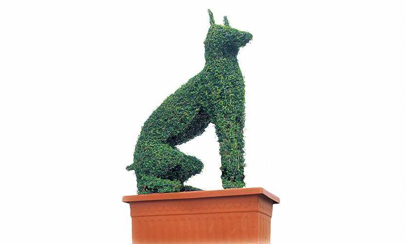 Topiary Doberman Dog (Ligustrum Jonandrum)