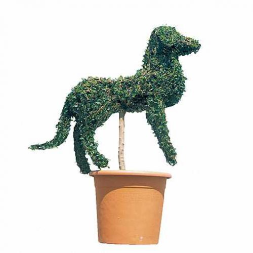 Topiary Dog Guardian (Ligustrum Jonandrum)