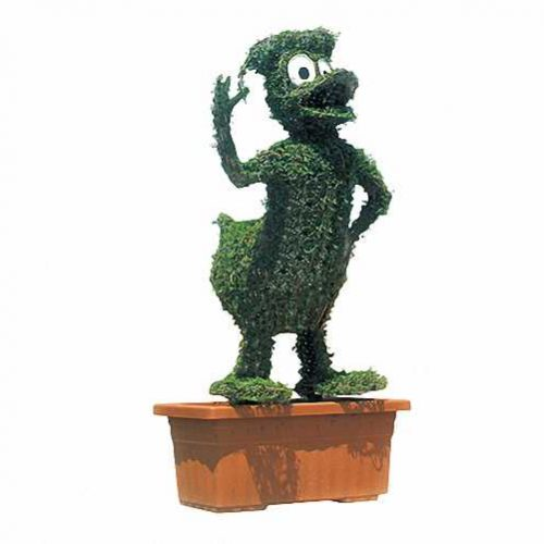Topiary Donald Duck (Ligustrum Jonandrum)