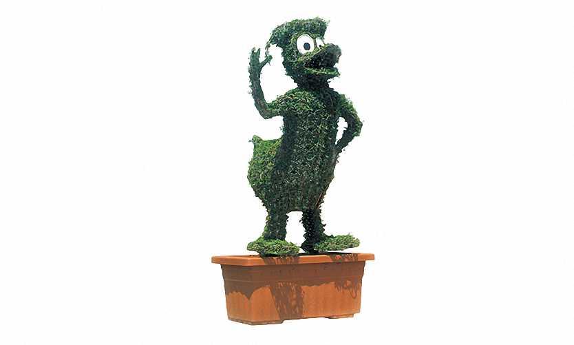 Topiary Donald Duck (Ligustrum Jonandrum)