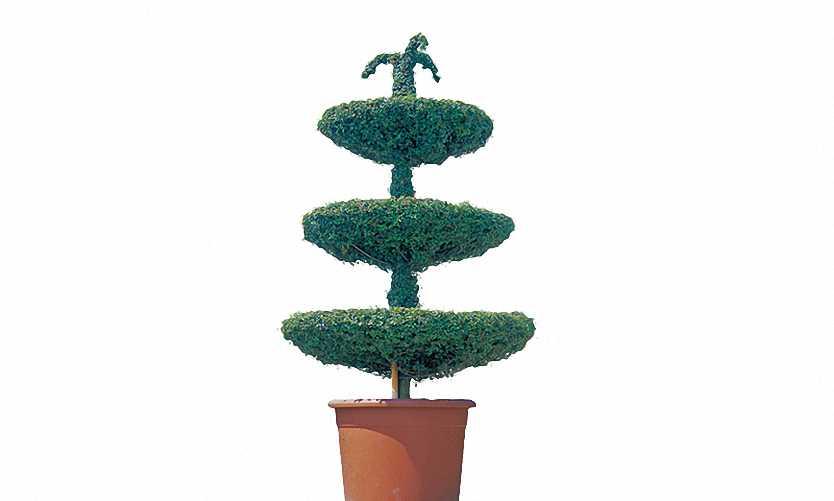 Topiary Fountain 3 Levels (Ligustrum Jonandrum)