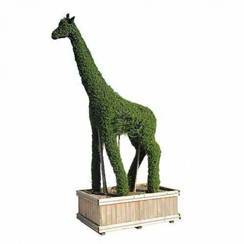 Topiary Giraffe (Ligustrum Jonandrum)