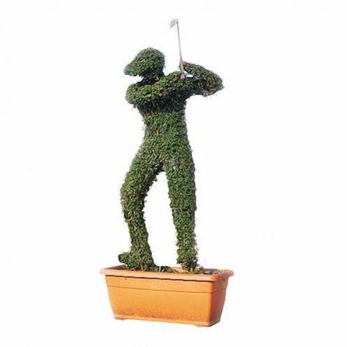 Topiary Golfer (Ligustrum Jonandrum)