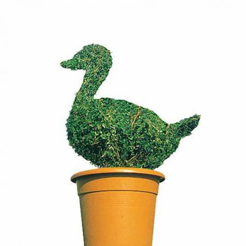 Topiary Duck (Ligustrum Jonandrum)