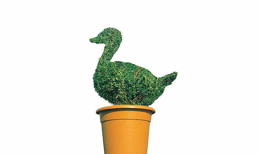 Topiary Duck (Ligustrum Jonandrum)