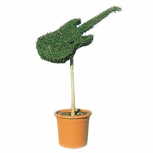 Topiary Guitar (Ligustrum Jonandrum)