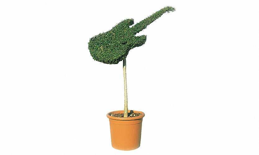 Topiary Guitar (Ligustrum Jonandrum)
