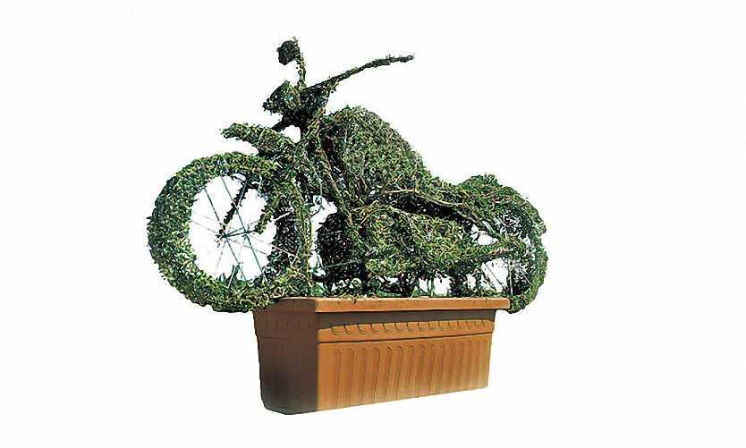 Topiary Harley Davidson (Ligustrum Jonandrum)