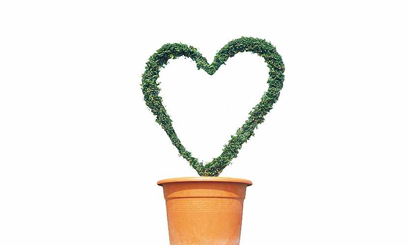 Topiary Heart (Ligustrum Jonandrum)