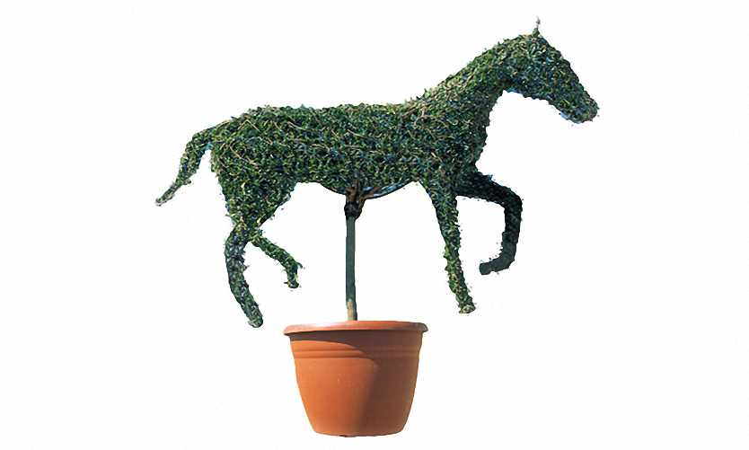 Topiary Horse (Ligustrum Jonandrum)