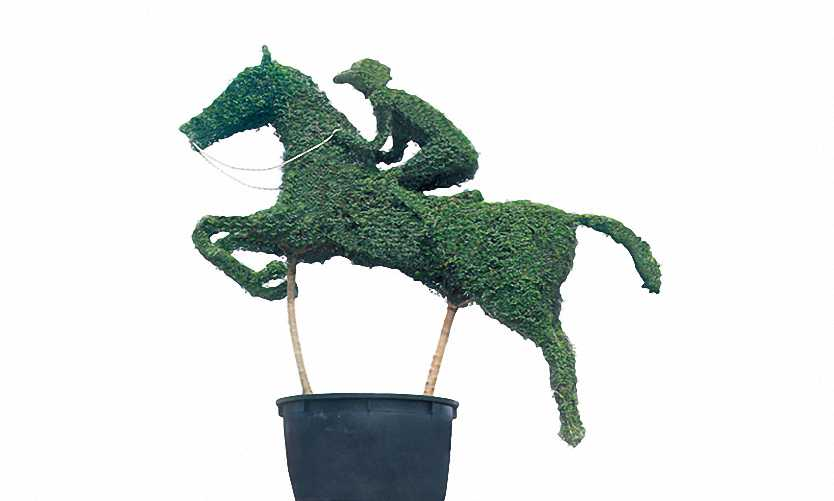 Horse With Jockey (Ligustrum Jonandrum)