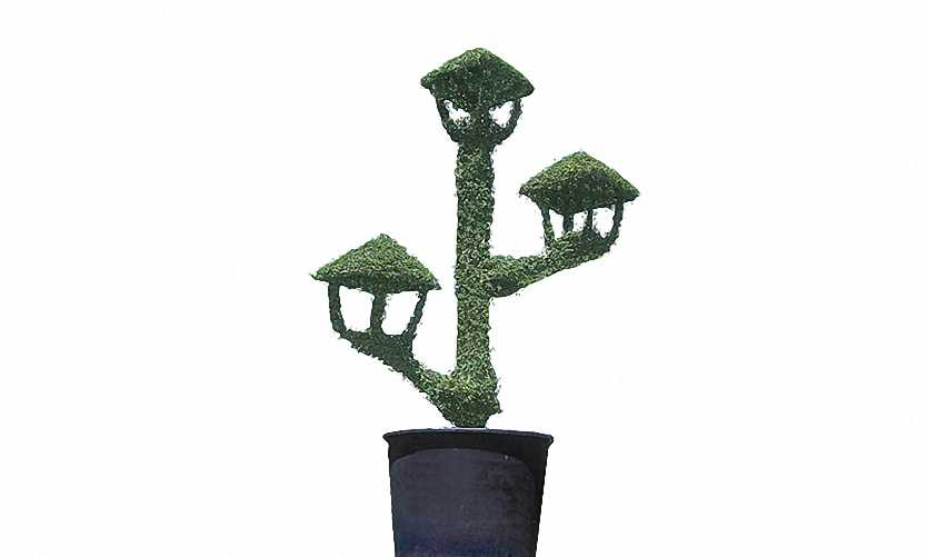 Lantern Upwards With 3 Lights (Ligustrum Jonandrum)