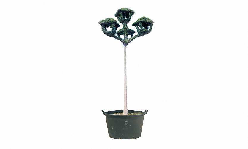 Lantern Upwards With 4 Lights (Ligustrum Jonandrum)