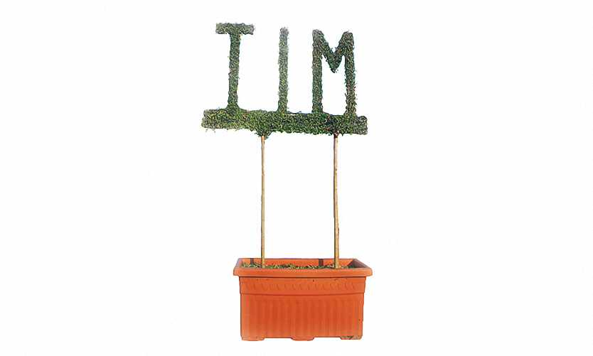 Topiary Letters Grown Together On Twin Wire High (Ligustrum Jonandrum)