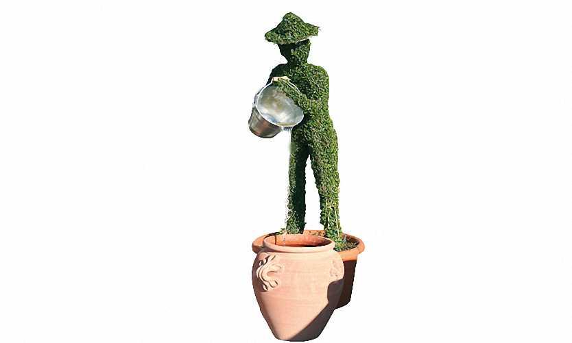Man With Bucket (Ligustrum Jonandrum)