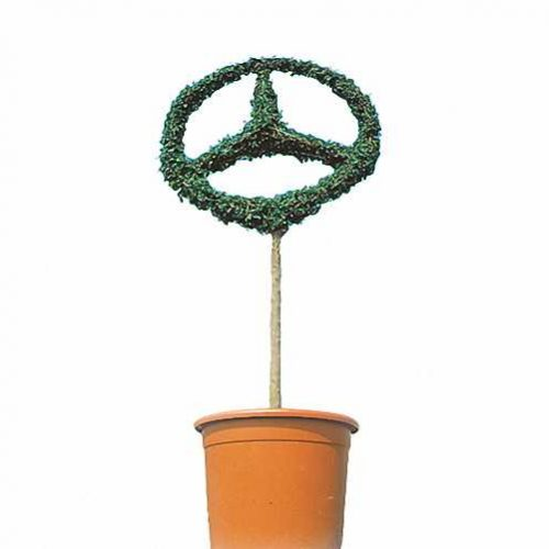 Mercedes Star Single (Ligustrum Jonandrum)
