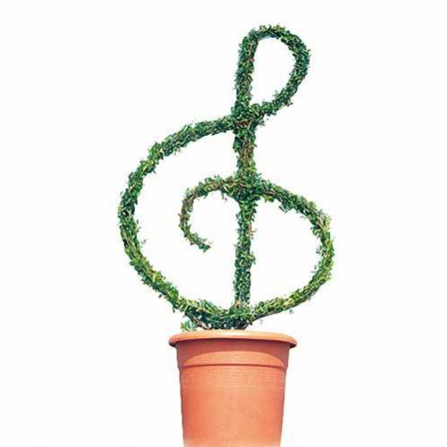 Topiary Treble Clef (Ligustrum Jonandrum)