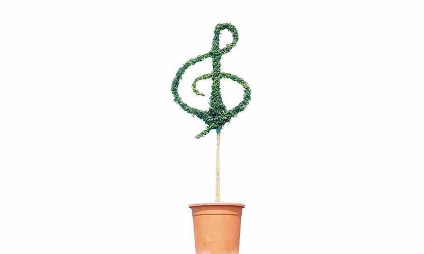 Topiary Treble Clef (Ligustrum Jonandrum)