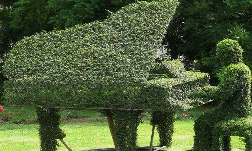 Topiary Piano With Pianist (Ligustrum Jonandrum)
