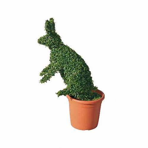 Topiary Rabbit (Ligustrum Jonandrum)