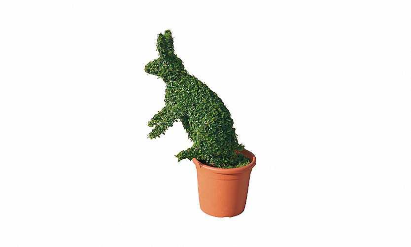 Topiary Rabbit (Ligustrum Jonandrum)