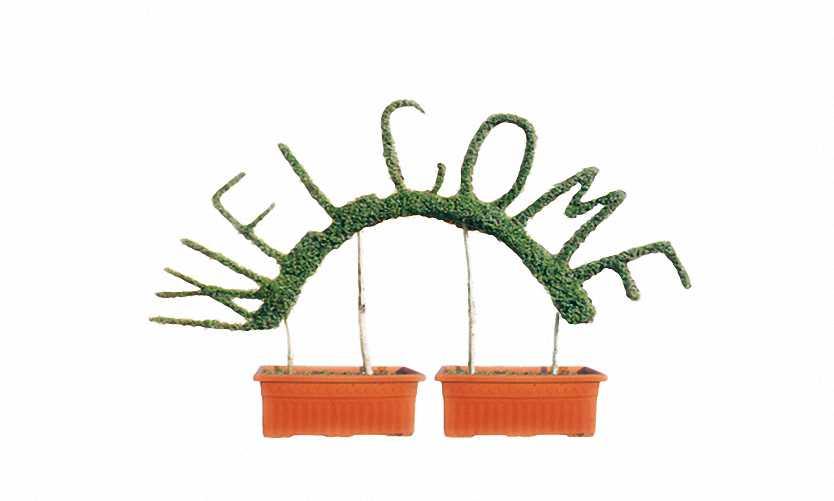 Topiary Welcome (Ligustrum Jonandrum)