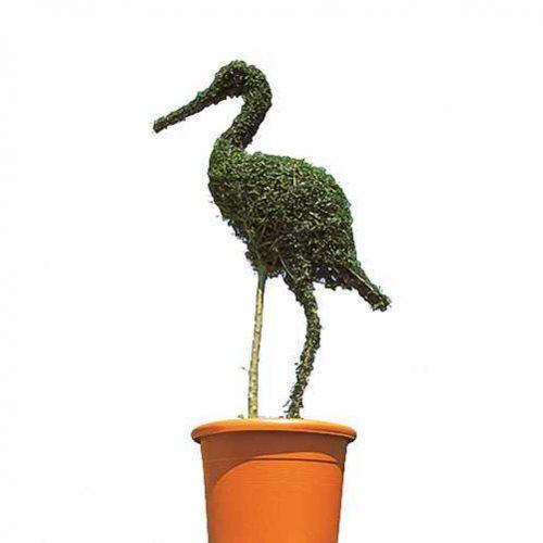 Topiary Stork (Ligustrum Jonandrum)