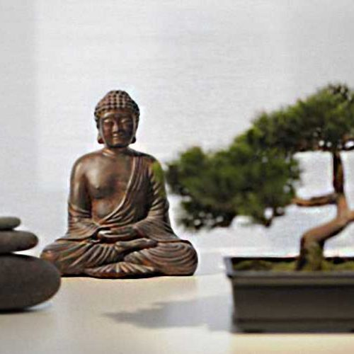 Buddhist Pine Bonsai (Chinese Yew)
