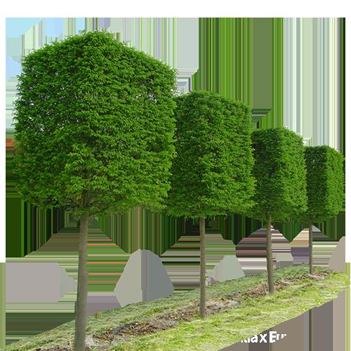 Cube Shaped Plants