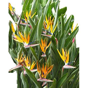 Exotic Garden Flowers