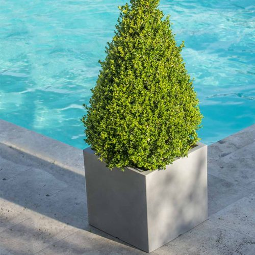 'Atlantis Light' Square Planter